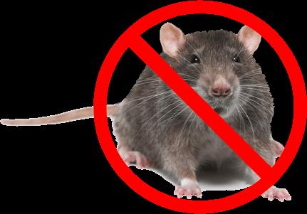 التخلص من الفئران بطرق سهلة ومجربة